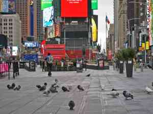 Times square pigeons and red step during covid-19